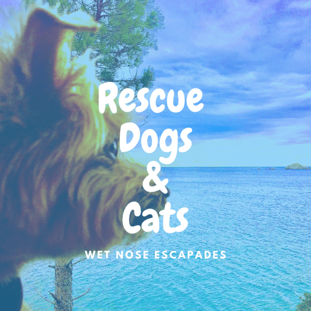 Rescue Dogs & Cats