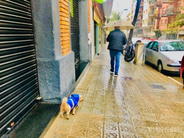An American Dog in Barcelona Lockdown: Days 35 to 50