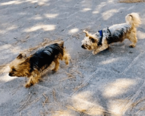 Social Distancing with Your Dog
