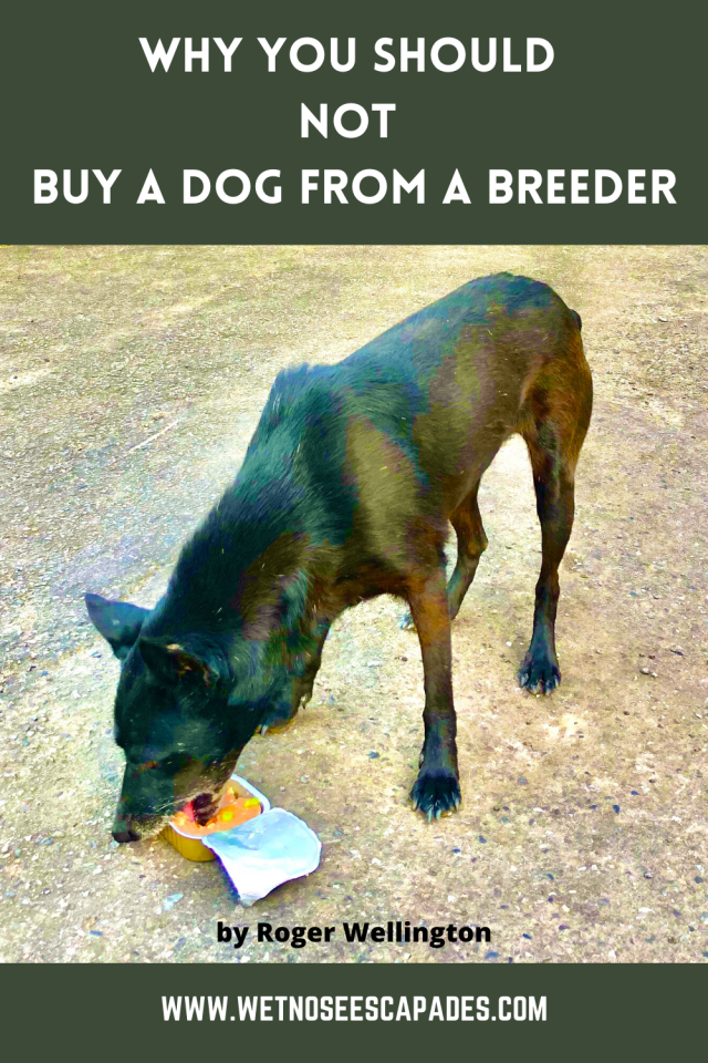 6 Reasons Why You Should NOT Buy a Dog from a Breeder