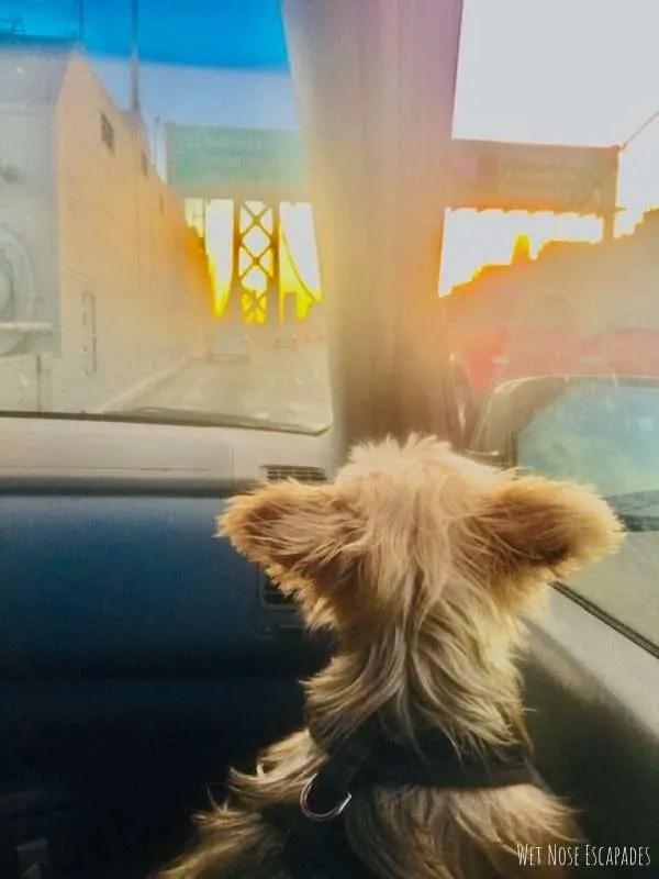 16 Dog Road Trip Essentials