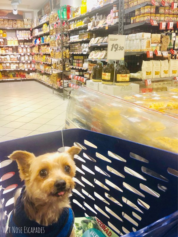 How to spoil your dog or yorkie