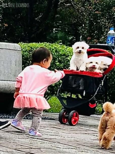 why dogs bite children 3