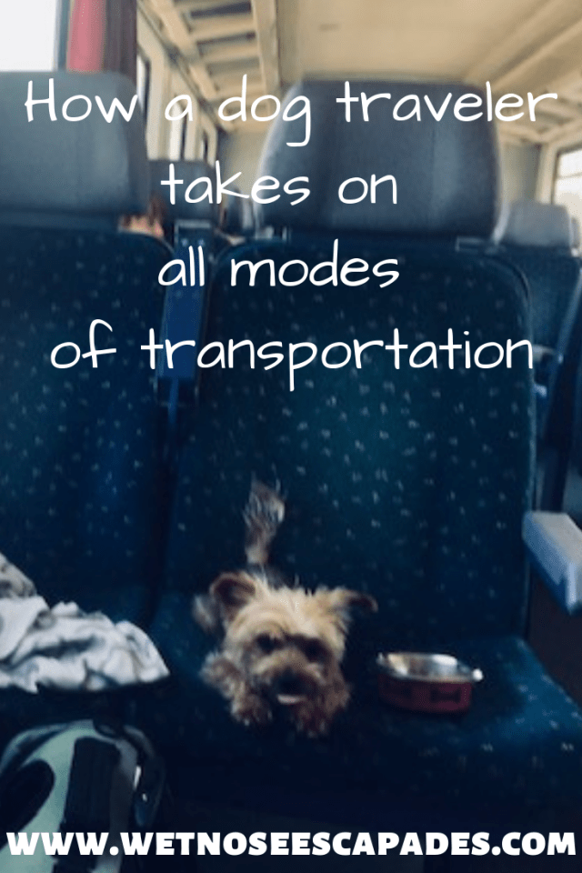 How a dog traveler takes on all modes of transportation