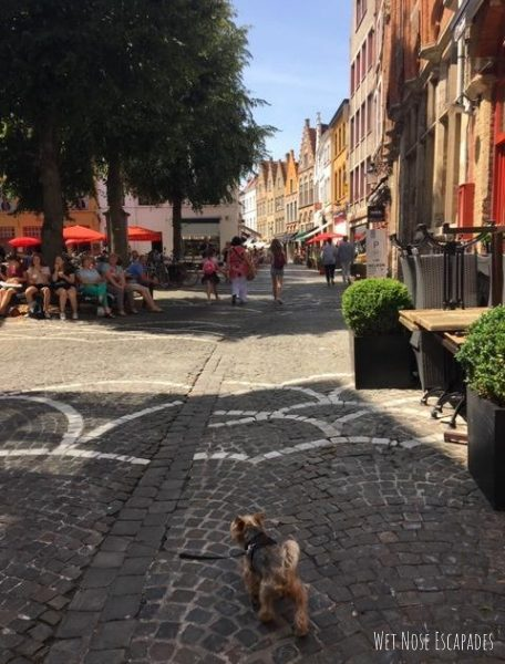 Dog-Friendly Places in Bruges, Belgium
