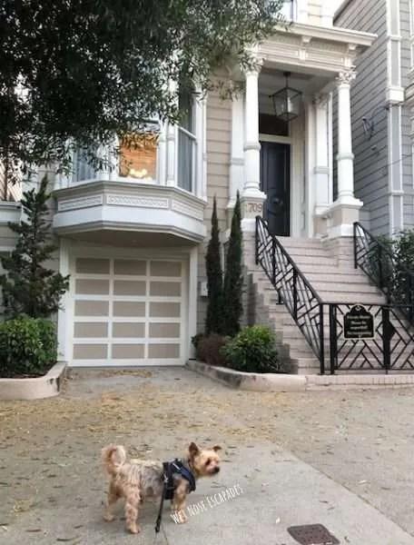 Yorkie Dog at Full House house