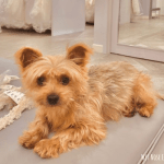 How to Incorporate Dogs into a Wedding (without their presence)