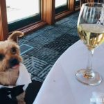 17 Tips How to Include Yorkies in a Wedding
