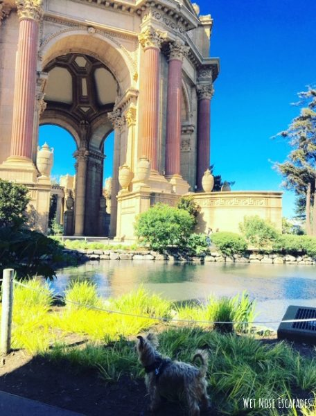 Dog-Friendly Activities in San Francisco Palace of Fine Arts
