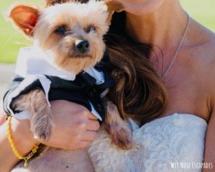 Dog Wedding Tips: Should You Have Your Dog in Your Wedding?