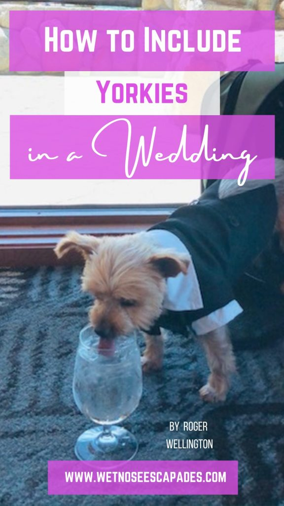 How to include yorkie dogs in wedding