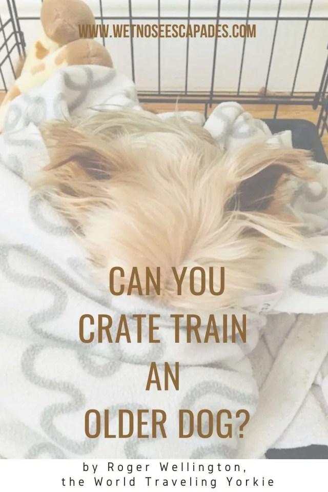 Crate Training Senior Dog Alternatives