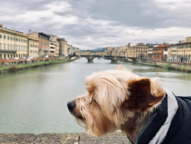 Dog Travel in Florence, Italy: Life as a Florentine dog