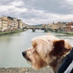 Life as a Florentine dog (VIDEO)