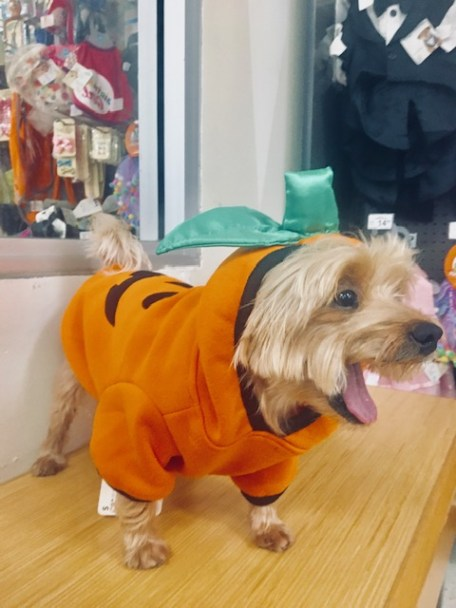 7 Tips to keep dogs and cats safe on Halloween