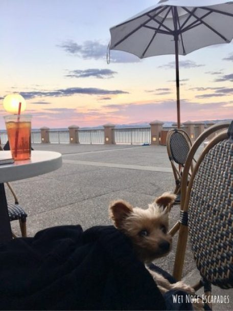 dog at monterey plaza hotel, Dog-friendly Activities in Monterey, CA