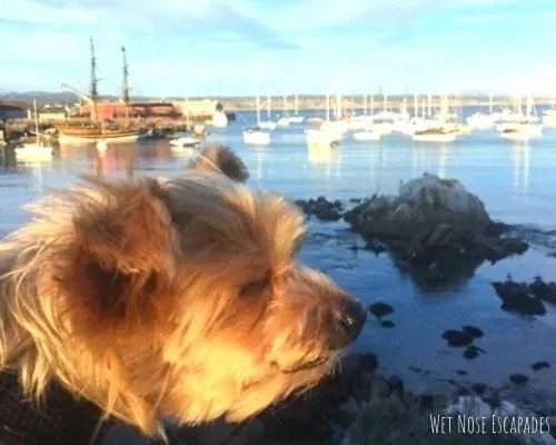 dog travel inspiration