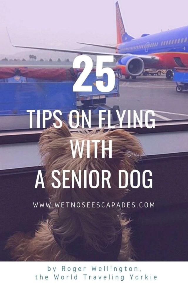 senior yorkie flying on airplane