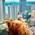 Dog-friendly Activities in Miami, Florida: 10 Things to do with Your Dog