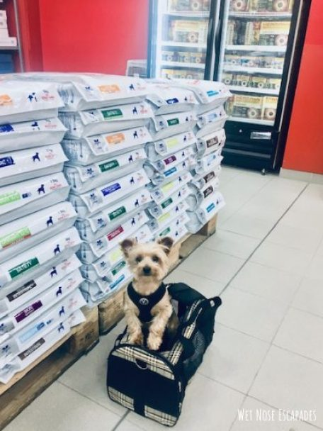 finding the right carrier, flying with a senior dog