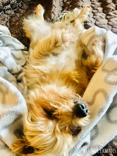 spoiled dog: stop sending kids pictures to childless friends