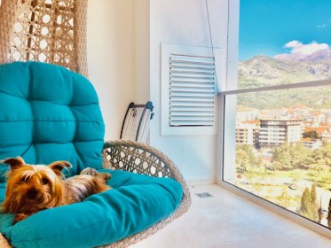 A Traveling Dog's life in Montenegro