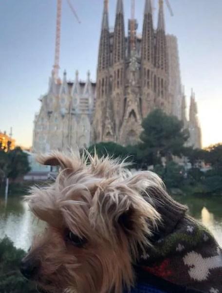 Roger Wellington conquers Barcelona! (VIDEO)
