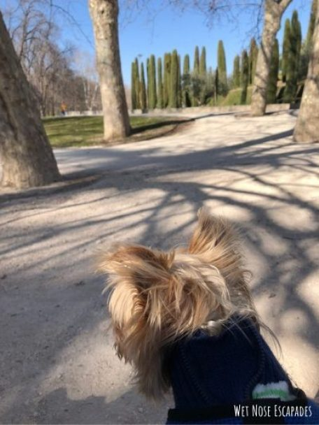 dog friendly madrid spain
