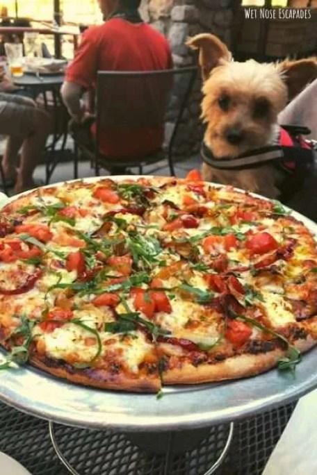 Base Camp, Dog-Friendly Restaurants in South Lake Tahoe, CA