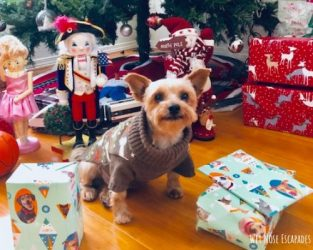 Gifts for Yorkies + Small Dogs: A Traveling Yorkie's Wish List