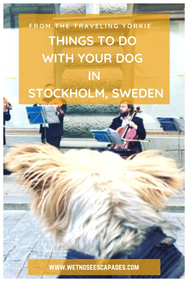 Things to do with Your Dog in Stockholm, Sweden
