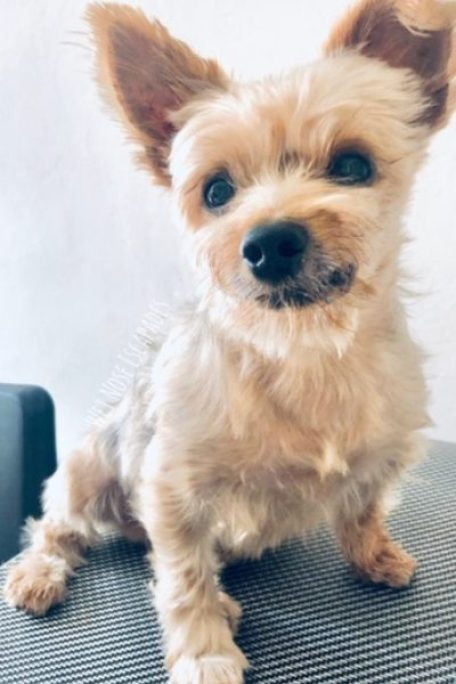 Getting Rid of a Dog for a Baby: Why Such Cruelty Must STOP