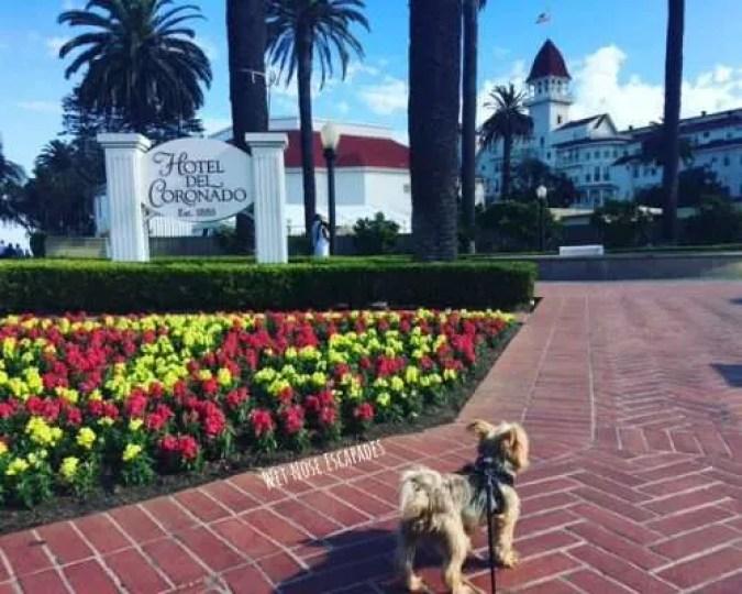 dog friendly hotel del coronado