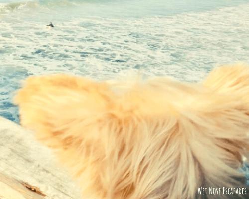 dog-friendly pacific beach in san diego