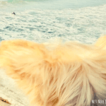 Dog-Friendly Activities in San Diego, CA: 10 Things to do with Your Dog