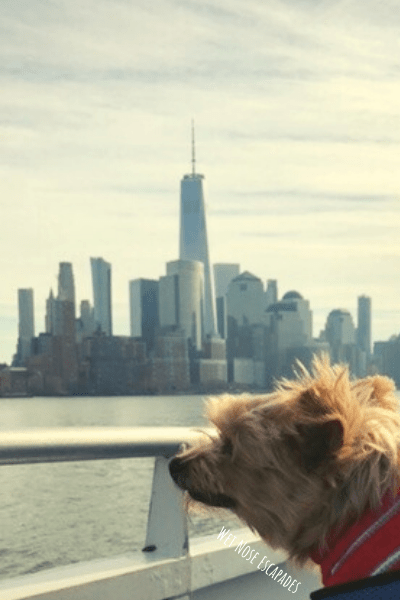 dog on ferry to hoboken, new jersey from new york city