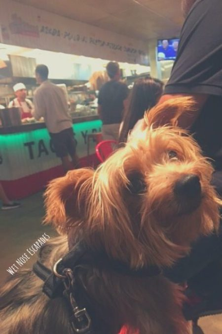 dog friendly restaurants san diego