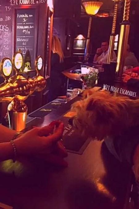 dog-friendly bars stockholm, sweden