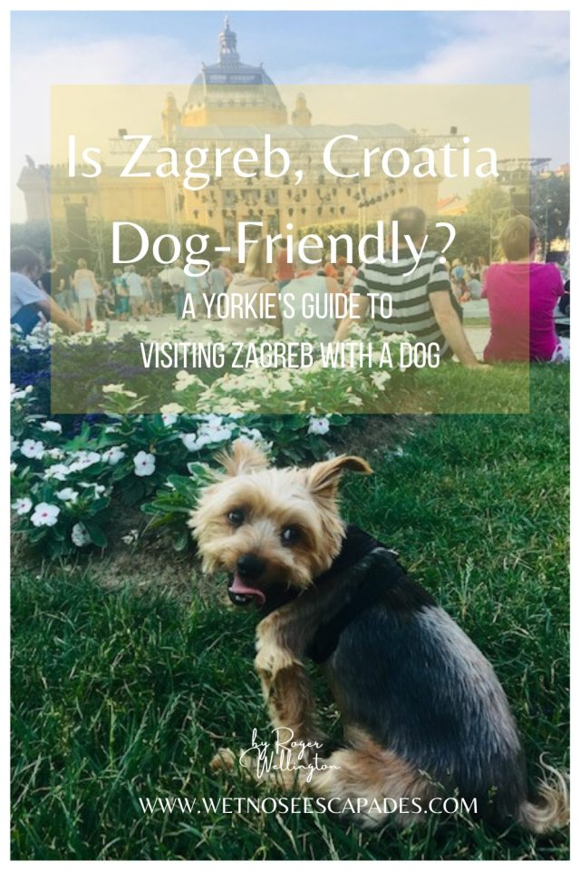 Is Zagreb, Croatia Dog-Friendly? A Yorkie's Guide to Visiting Zagreb with a Dog