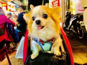 Dogs of Taipei, Taiwan: Part 2 (VIDEO)
