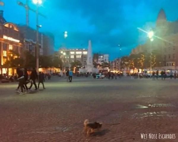 dog friendly Dam Square Amsterdam