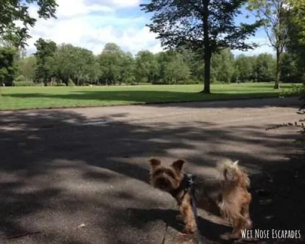 dog friendly parks amsterdam
