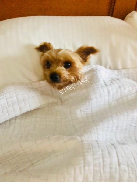 6 Tips on Finding and Saving Money on Dog-Friendly Accommodations