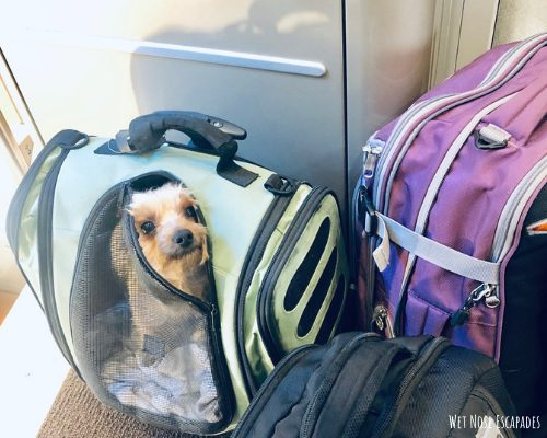 Small Dog or Yorkie Travel Bag
