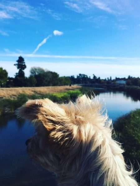 dog friendly parks in santa cruz, california