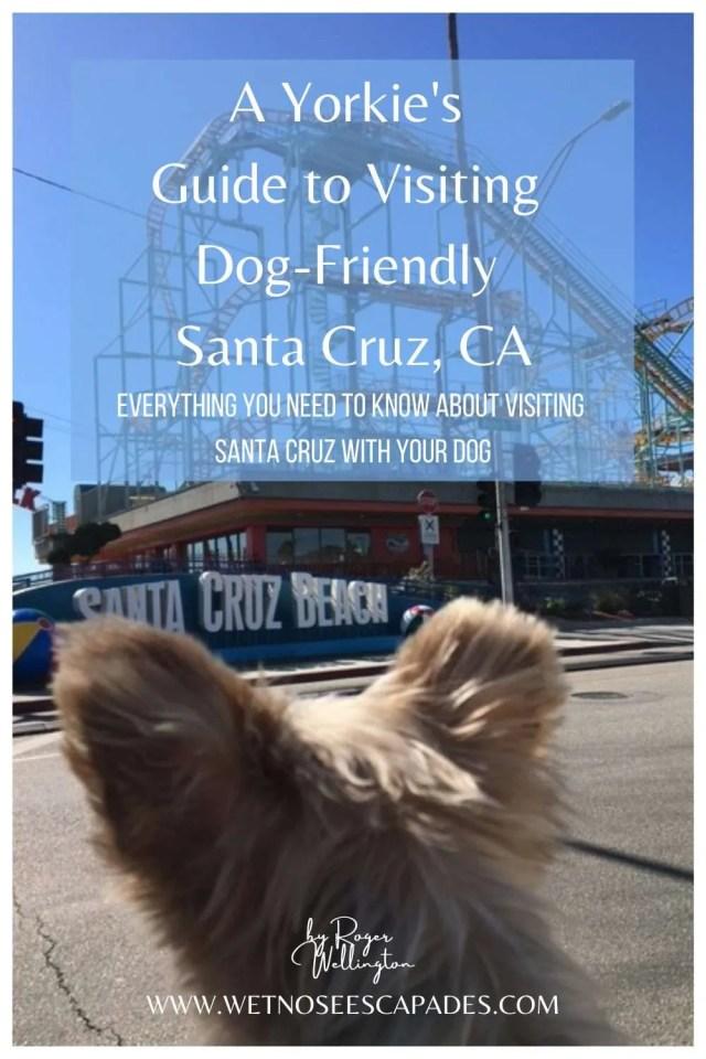 A Yorkie's Guide to Visiting Dog-Friendly Santa Cruz, CA