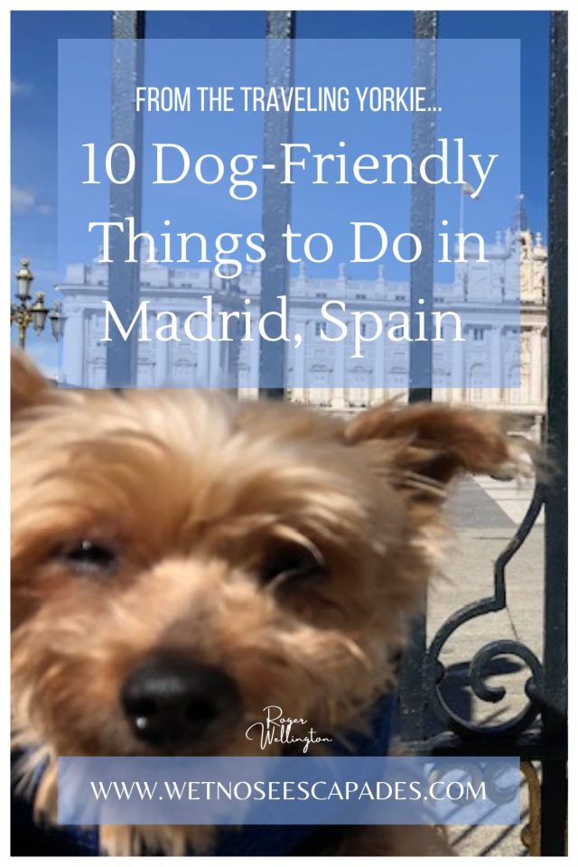 10 Dog-Friendly Things to Do in Madrid, Spain