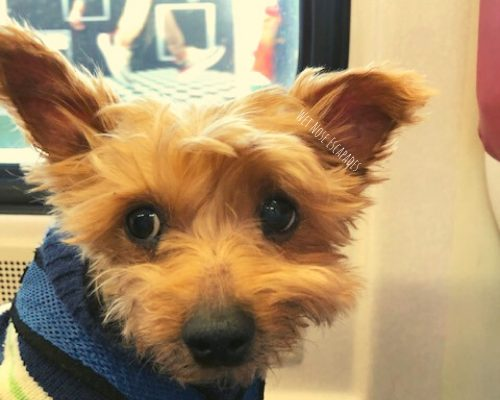 Dog-Friendly Greenwich, CT: Taking Your Dog to Greenwich from NYC