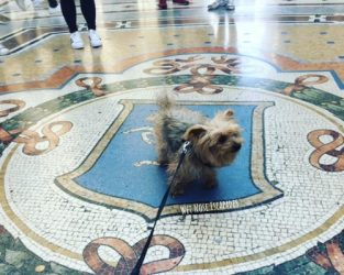 Is Milan, Italy Dog-Friendly? A Yorkie's Guide to Visiting Milan with a Dog
