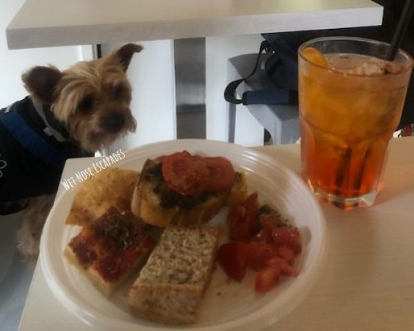 Yorkie dog at aperitivo in Italy